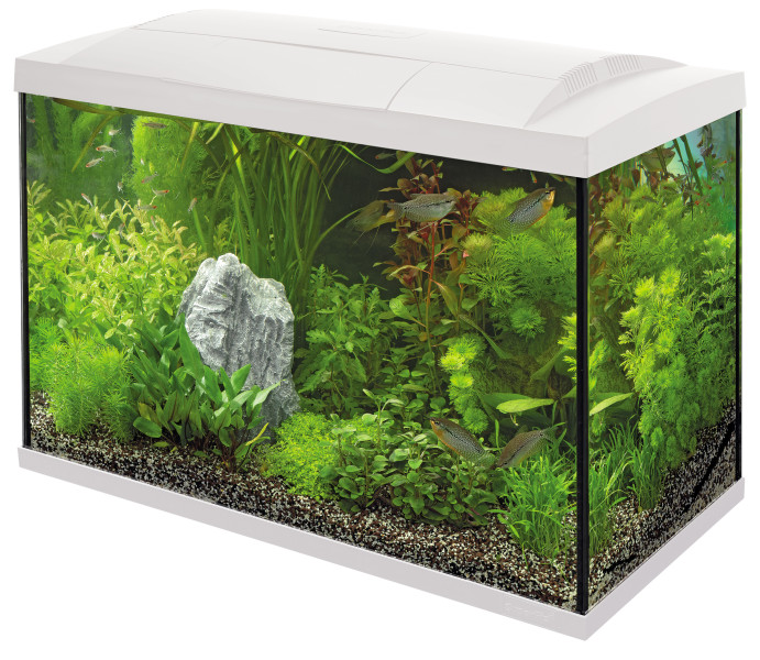 SuperFish aquarium Start 100 Tropical kit wit