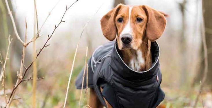 Hondenmode tegen kou en regen