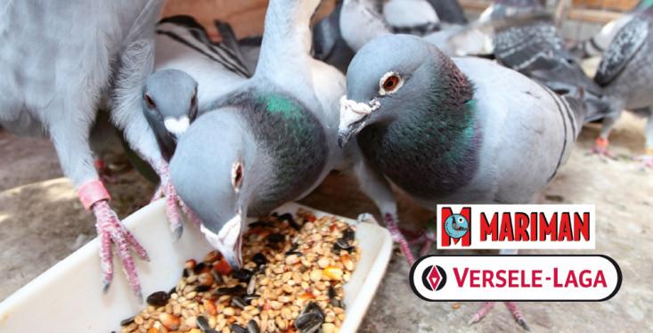 28 november: presentatie duivenvoeding