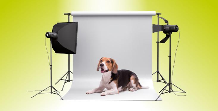 3 november: Dierenfotograaf