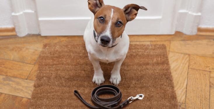 7 december: Probleemgedrag bij honden