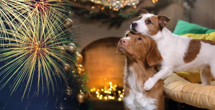 Is uw huisdier bang voor vuurwerk?