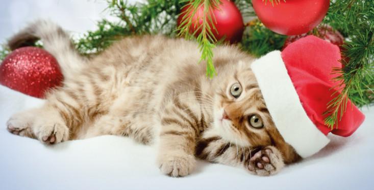 De leukste kerstcadeaus!