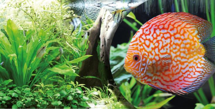 1 december: Aquariumdag