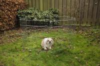 Beeztees konijnenren verzinkt 6 panelen thumb