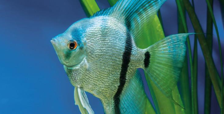 1 & 2 maart: Aquariumdagen