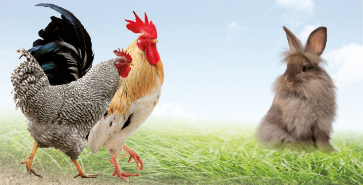 30 maart: Kippen- en konijnendag