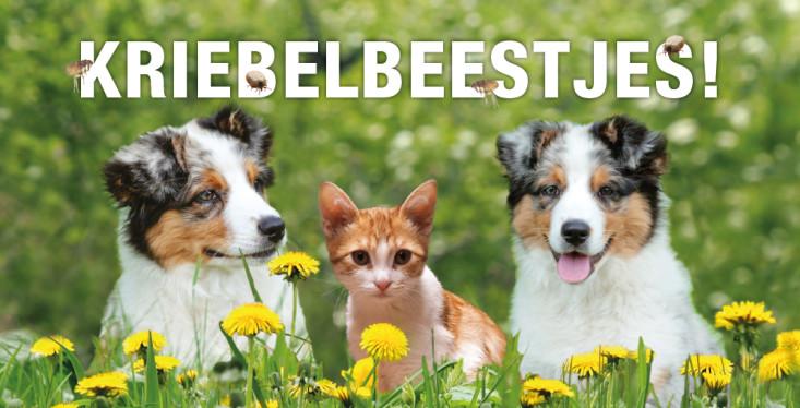 Bescherm je huisdier, 15% korting!