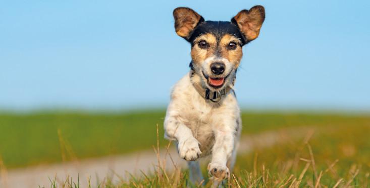 Op pad met je hond!