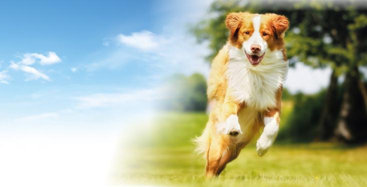 25 mei: Hondenfeest