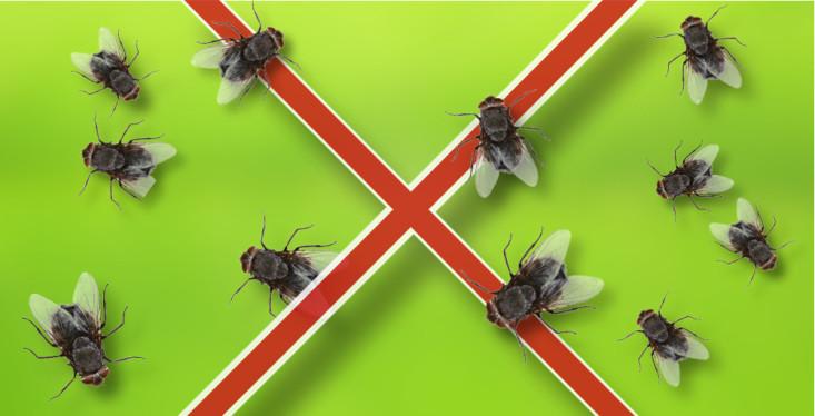 Houd je dier insectenvrij