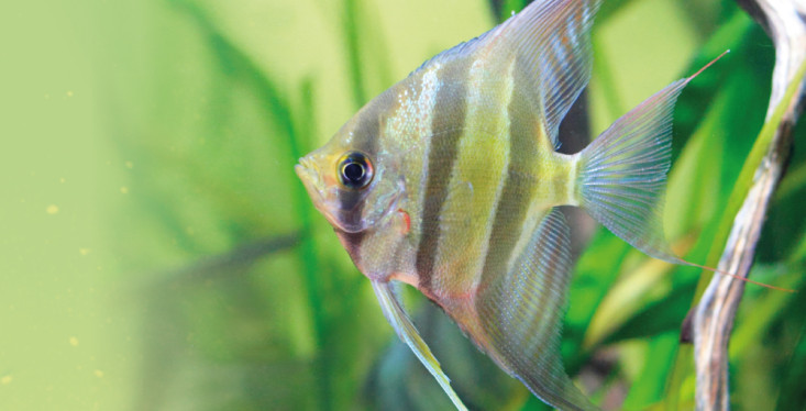 3 januari: Aquariumdag