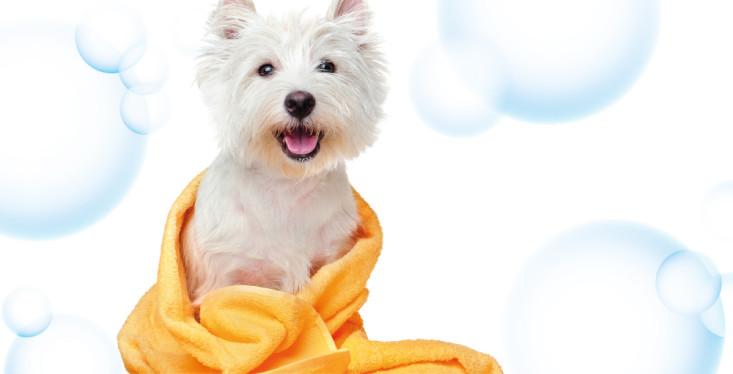 25 januari: Beautydag voor de hond