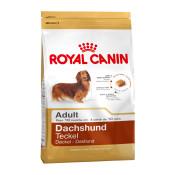 rc_adult_dachshund_adult.jpg