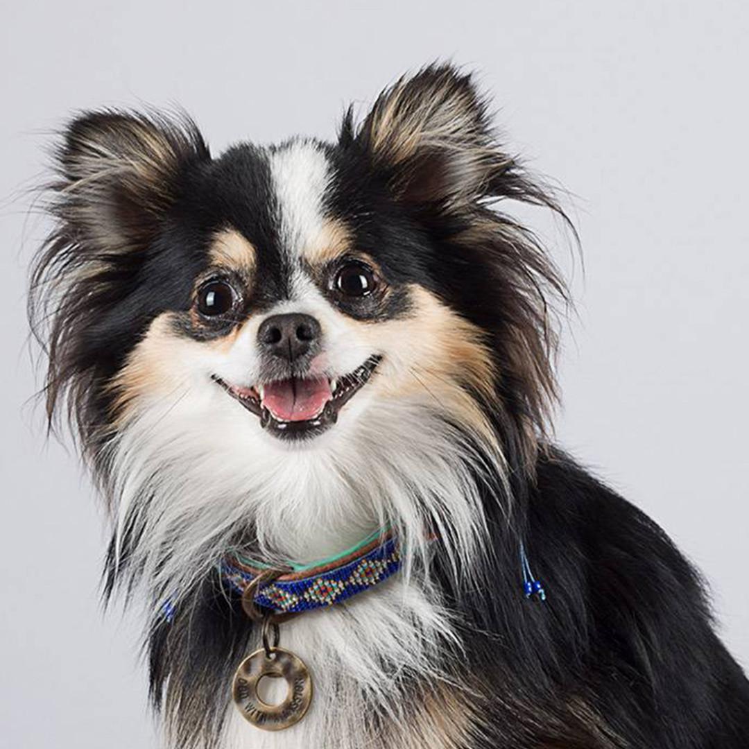 Dog with a Mission halsband Stella Blue