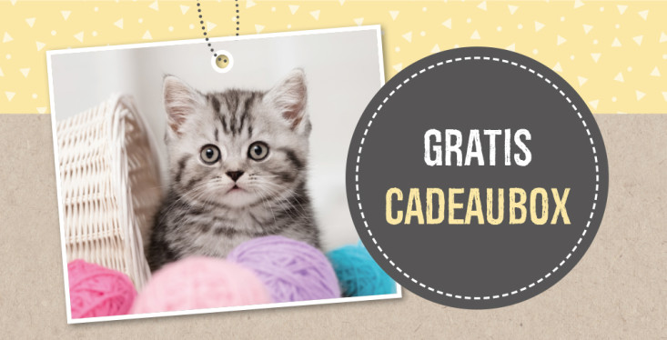 Welkom kitten!