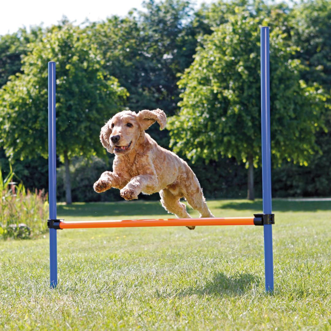 TRIXIE Dog Activity Agility Horde