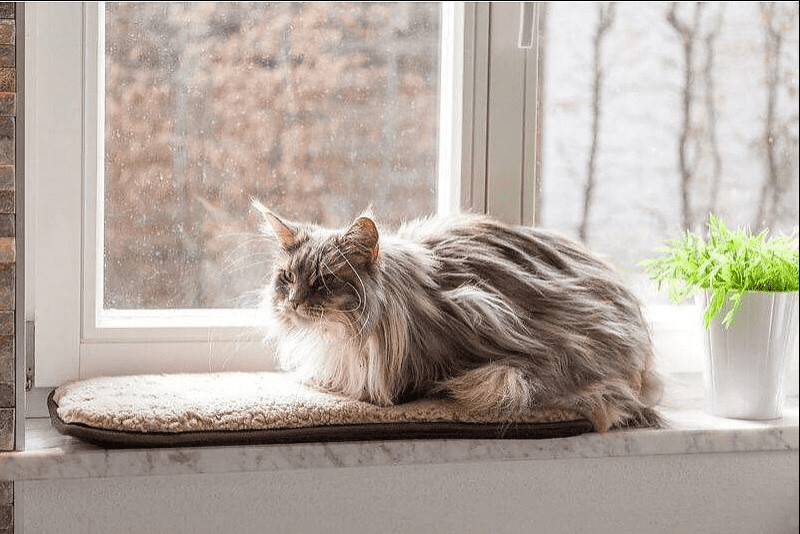 Petlando Windowchiller cappuccino