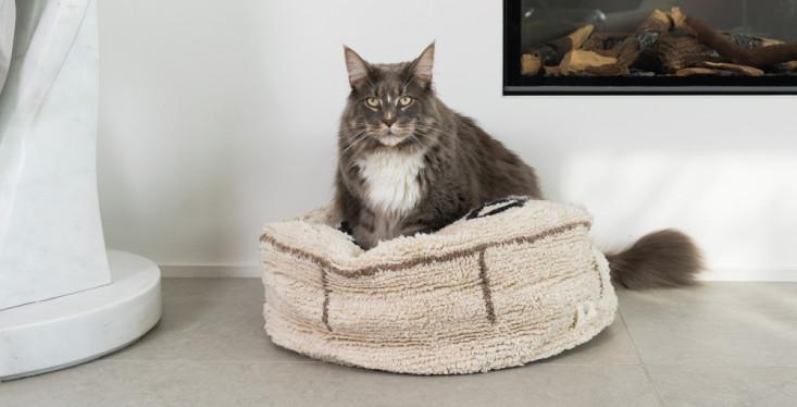 Een pracht voor je kat
