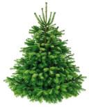 kerstboom-nordmann-witte-achtergrond-150dpi.jpg