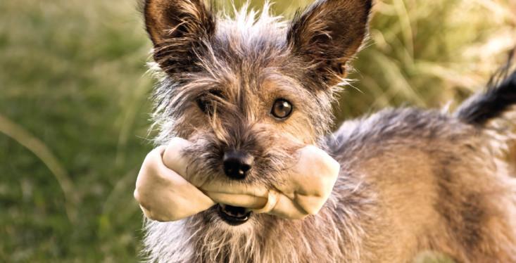 Overheerlijke hondensnacks