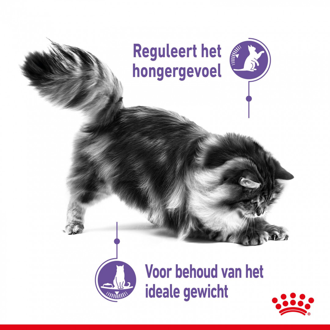 Royal Canin kattenvoer Appetite Control Care 400 gr