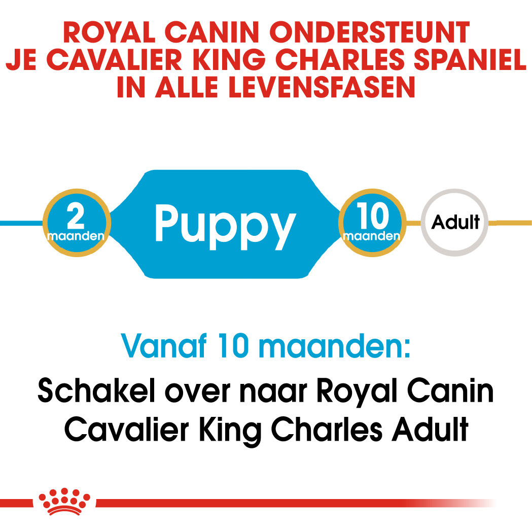 Royal Canin hondenvoer Cavalier King Charles Puppy 1,5 kg