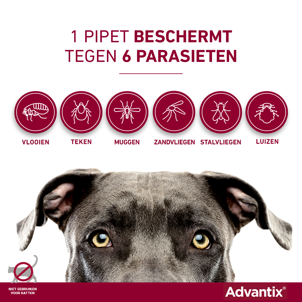 Advantix 600 4 pipetten