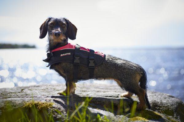 Baltic Hondenzwemvest Mascot Oranje/Zwart