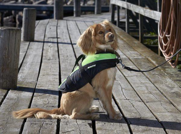 Baltic Hondenzwemvest Mascot Groen/Zwart